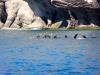 Seelöwen in Sicht
