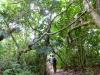 Wanderung entlang der Küstenlinie im Cahuita National Park Costa Rica