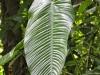 Zimmerpflanzenblatt in XXL Grösse