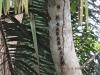 Kleine Fledermäuse am Baumstamm