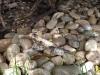 Wer sieht den Leguan?