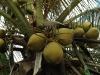 Wer hat die Kokosnuss geklaut?