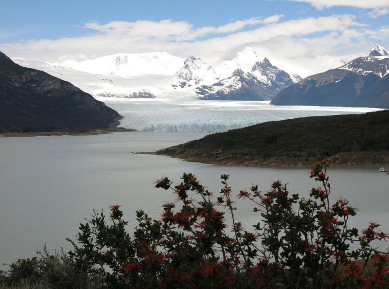 Der Gletscher Perito Moreno, vorn ein blühender Baum