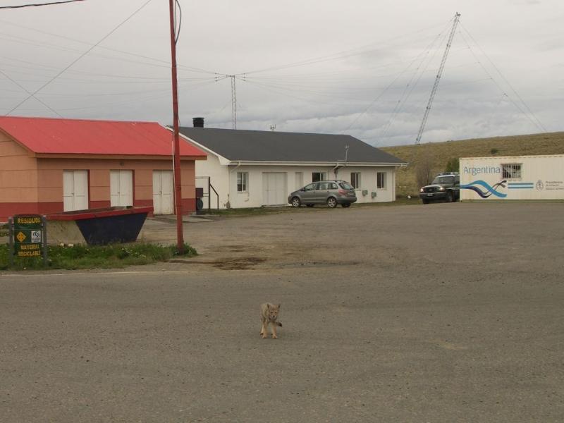 An der chilenischen Grenze warten die Füchse auf all die Lebensmittel, die hier vernichtet werden müssen