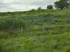Agavenfelder