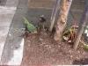 urban gardening :)