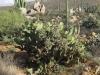 überraschenderweise mal ein Kaktus..