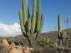 oh..ein Kaktus