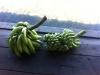 Koch- und Bratbananen