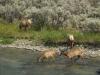 Impressionen Yellowstone National Park
